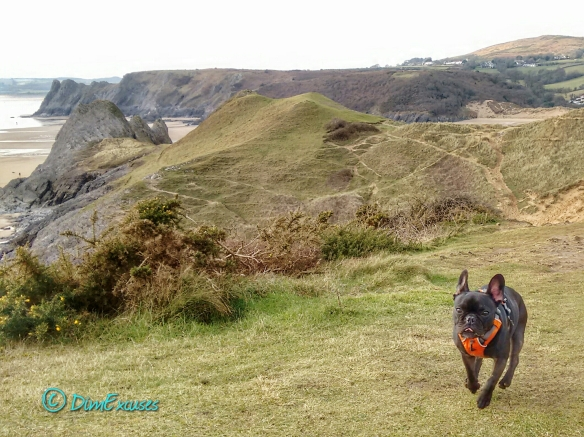 Molly on Pennard Cliffs
